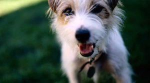 Şile Ulupelit Köpek Oteli