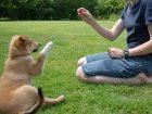 Yavru Köpeklerde Isırma