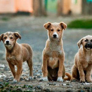 Köpek Eğitimi Fiyatları