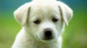 Sultangazi Köpek Eğitim Çiftliği