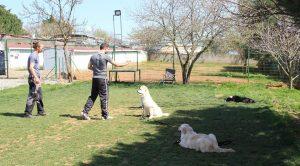 Arnavutköy Köpek Eğitim Çiftliği İstanbul
