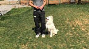 BichonFrise Köpek Eğitimi Eğitmeni