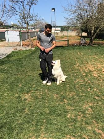 Başakşehir Köpek Eğitim Çiftliği
