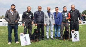 Beylikdüzü Köpek Eğitim Çiftliği İstanbul