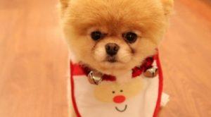 Şişhane Köpek Pansiyonu