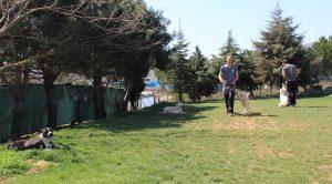 Köpek Eğitimi Kangal İstanbul