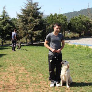 Köpek Eğitimi Bayrampaşa Adresi