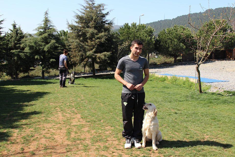 BassetHound Köpek Eğitimi Eğitmeni
