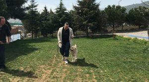 Çatalca Köpek Eğitim Çiftliği