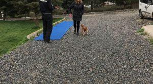Beykoz Köpek Eğitim Çiftliği