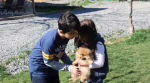 Evde Yavru Köpek Eğitimi