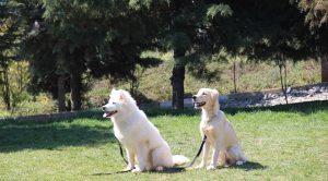 K9 Köpeklerinin Fiyatları Nedir