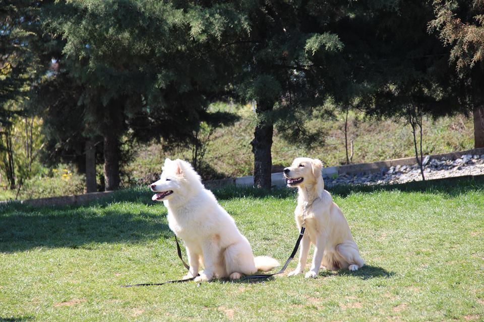 Adalar Köpek Eğitim Çiftliği İstanbul