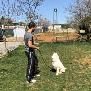 AkitaInu Köpek Eğitimi Eğitmeni