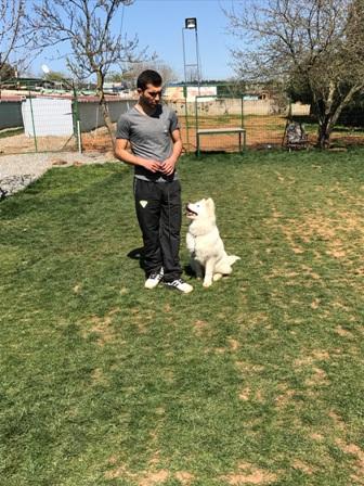 Terrier Glen Of ımaal Köpek Eğitimi