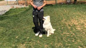 Bahçelievler Köpek Eğitim Çiftliği İstanbul