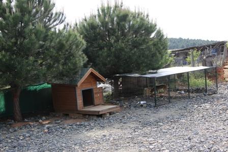 Bağcılar Köpek Eğitim Çiftliği istanbul