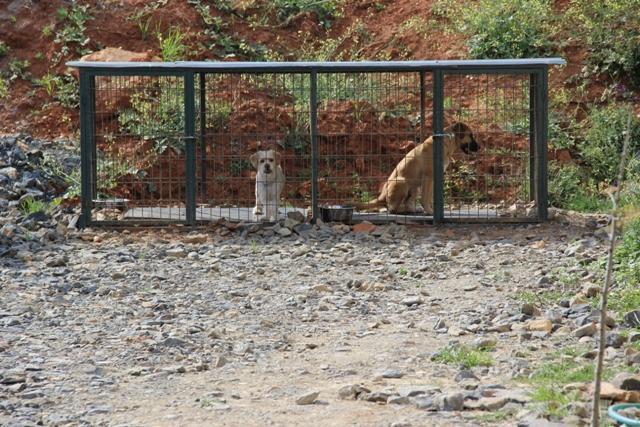 Bayrampaşa Köpek Eğitim Merkezi