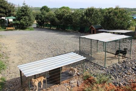 Av köpeği eğitimi eğitmeni
