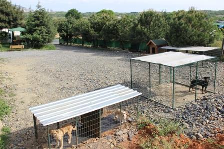 Şişli Köpek Eğitim Merkezi